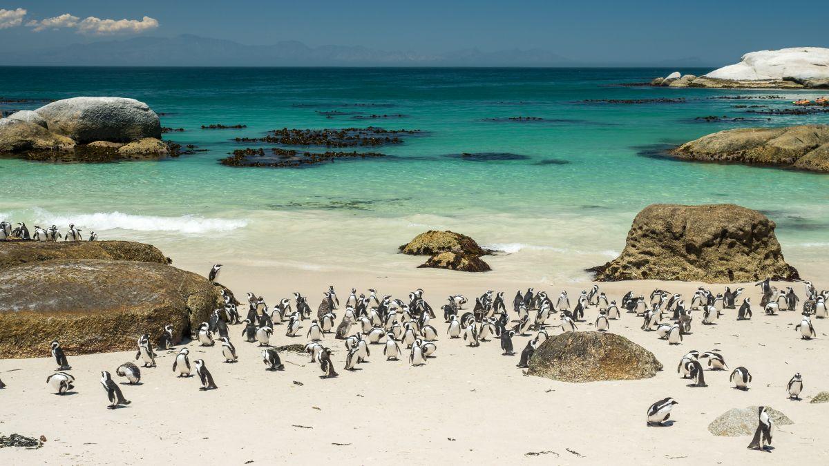 Dél-Afrika legnépszerűbb randevújai