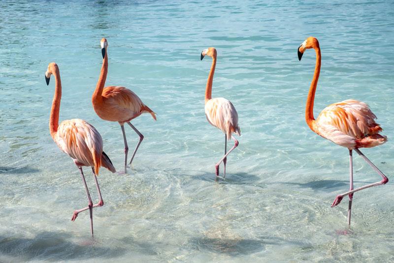 Aruba | flamingók | - OTP Travel Utazási Iroda