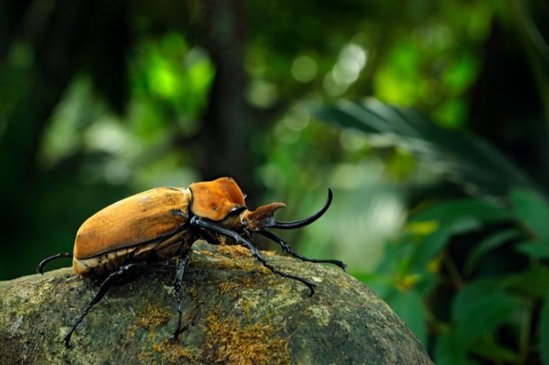 Costa Rica | orrszarvúbogár - OTP Travel Utazási Iroda