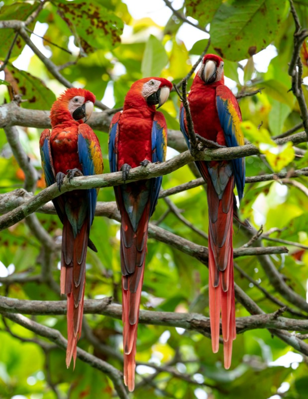 Costa Rica | ara - OTP Travel Utazási Iroda