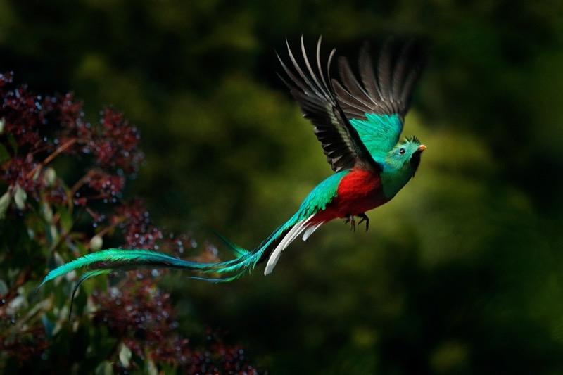 Costa Rica | Ragyogó quetzal - OTP Travel Utazási Iroda