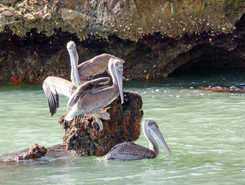 Dominikai Köztársaság | Los Haitises Nemzeti Park madárvilága 1 - OTP Travel Utazási Iroda