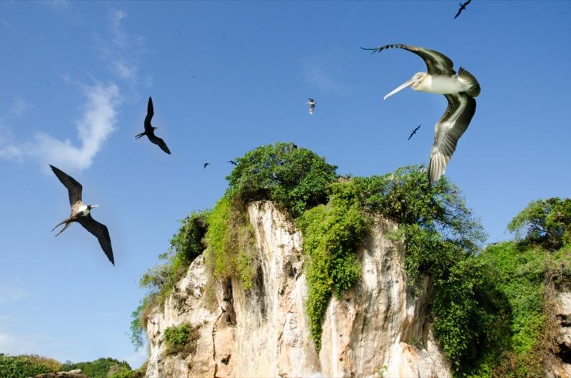 Dominikai Köztársaság | Los Haitises Nemzeti Park madárvilága 2 - OTP Travel Utazási Iroda