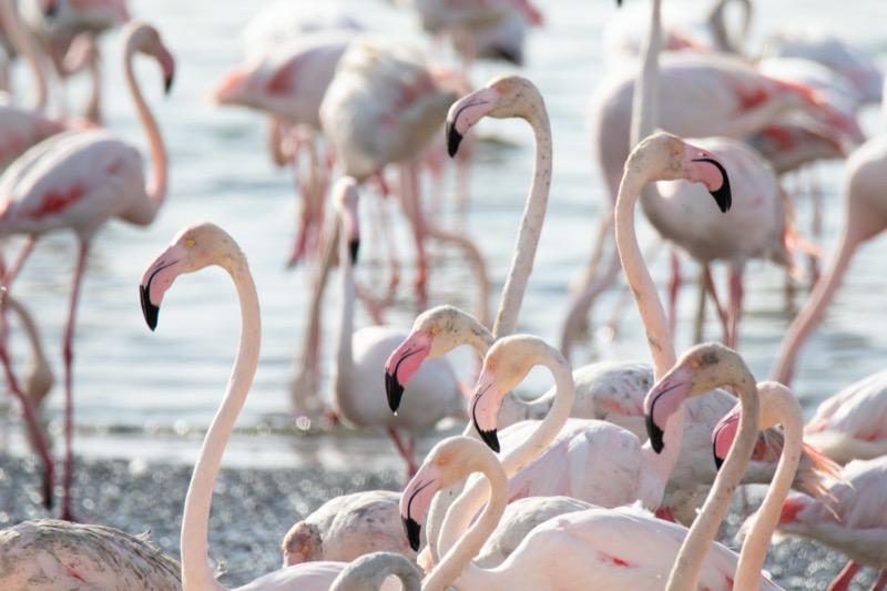 Al Wathba vizes élőhely rezervátum, Abu Dhabi - OTP TRAVEL utazási iroda