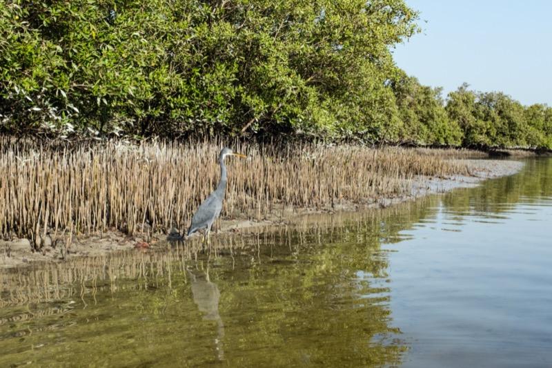Mangrove Nemzeti Park, Abu Dhabi - OTP TRAVEL utazási iroda