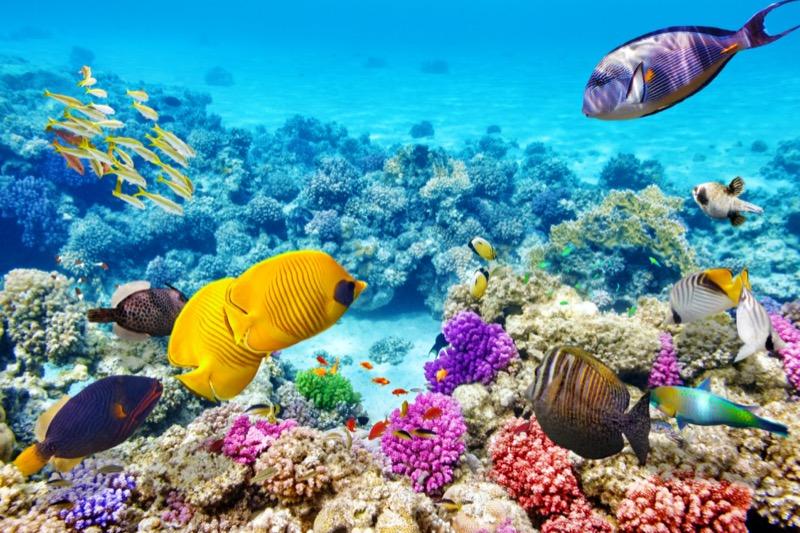 Egyiptom | Hurghada | halak - OTP Travel Utazási Iroda