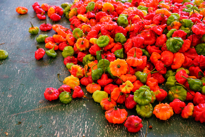 Jamaica, Scotch Bonnet Pepper - OTP Travel Utazási Iroda