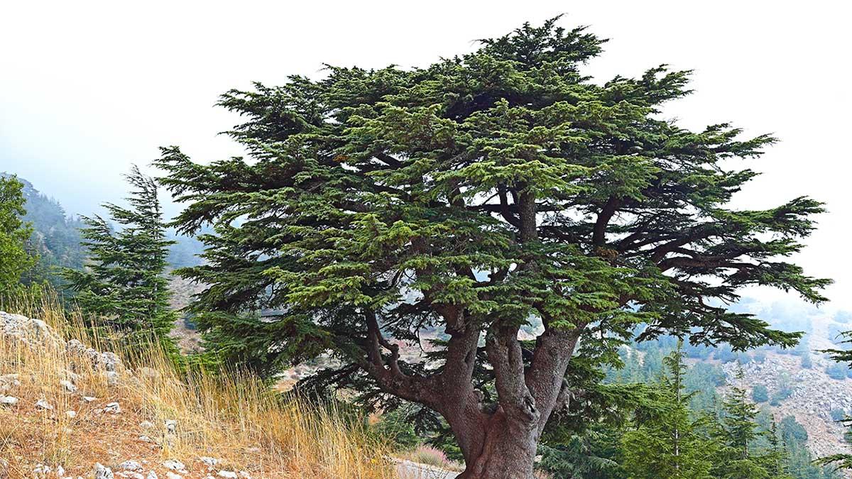 Libanoni cédrusok nyomában - OTP Travel Utazási Iroda