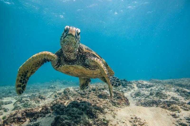 Maldív-szigetek tények 04 - OTP Travel Utazási Iroda
