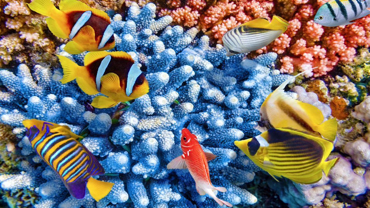 Fenntartható turizmus a Maldív-szigeteken - OTP Travel Utazási Iroda
