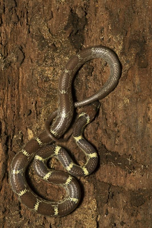 Maldív-szigetek kígyók - OTP Travel Utazási Iroda