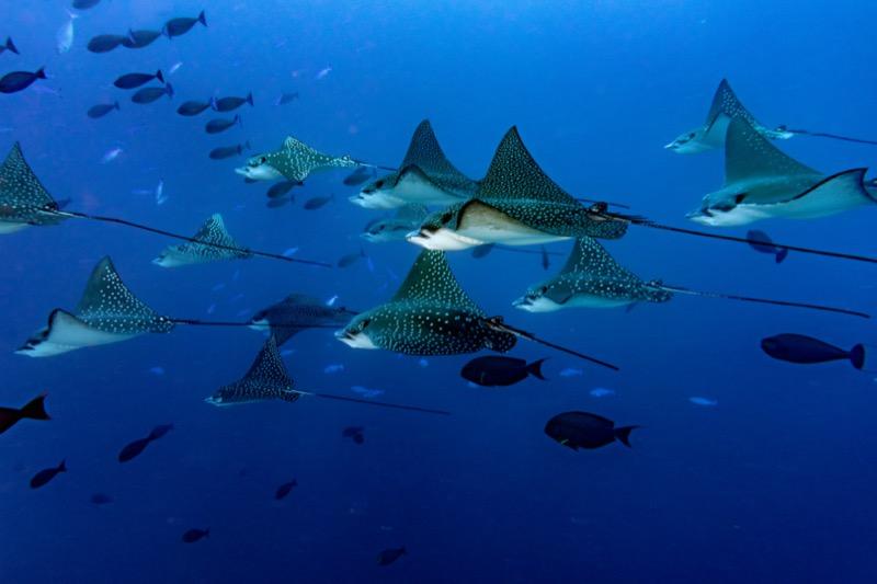 Maldív-szigetek turizmus - OTP Travel Utazási Iroda