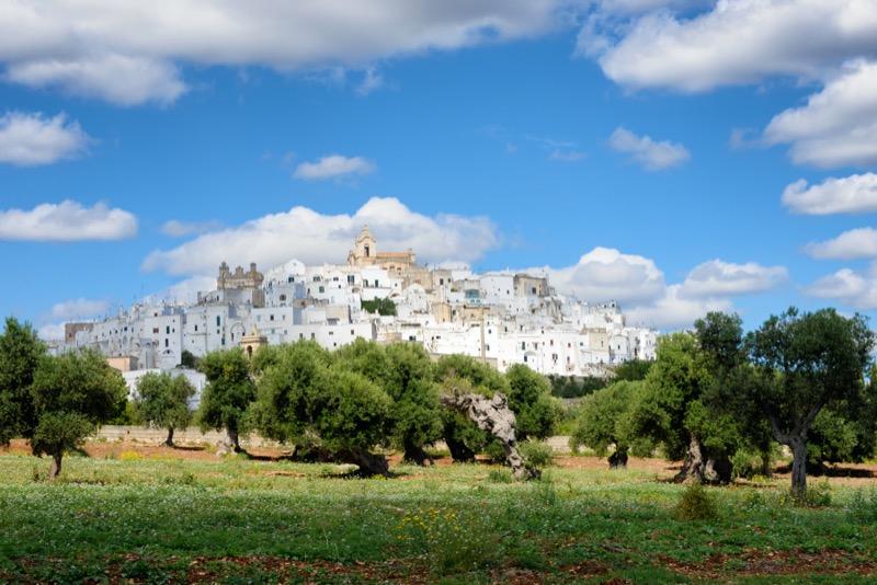 10 érdekes tény Pugliáról | olivafa - OTP Travel Utazási Iroda