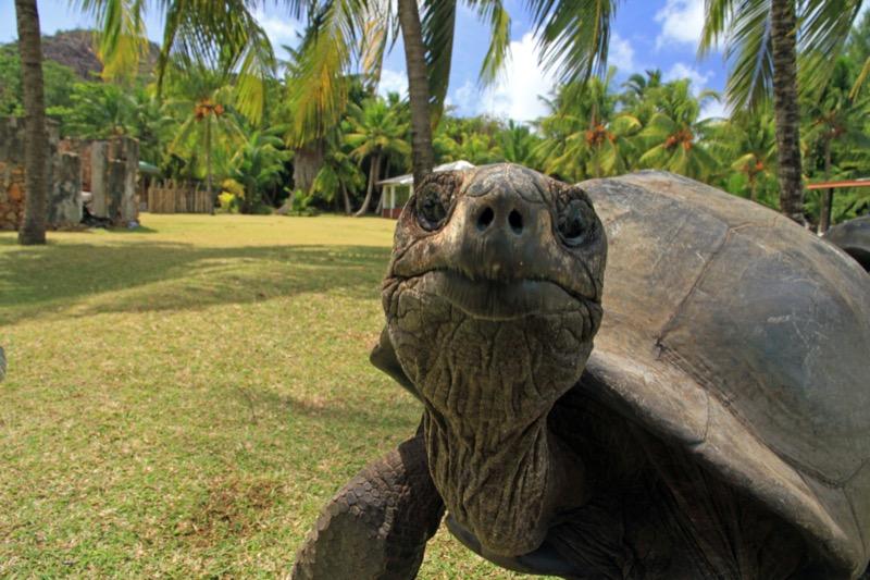 Seychelle-szigetek | Curieuse - OTP Travel Utazási Iroda