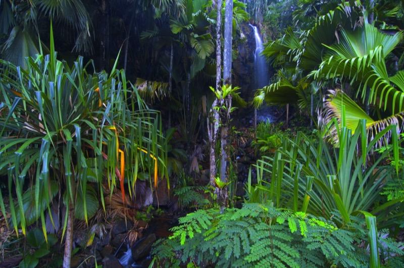 Seychelle-szigetek | Vallée de Mai - OTP Travel Utazási Iroda