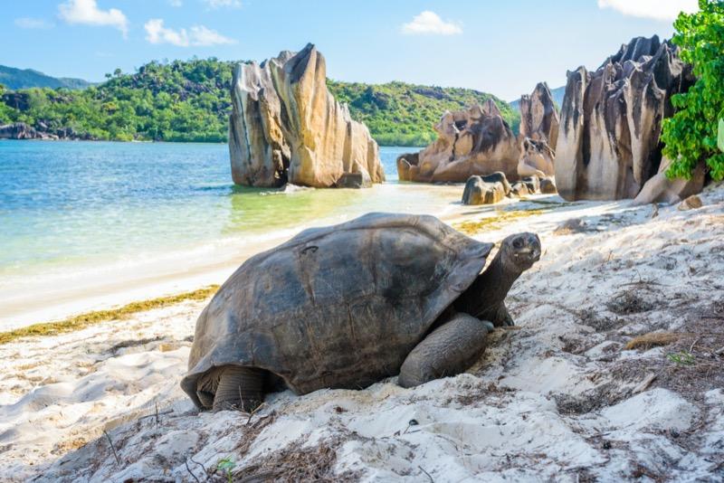 Seychelle-szigetek | óriásteknős 1 - OTP Travel Utazási Iroda