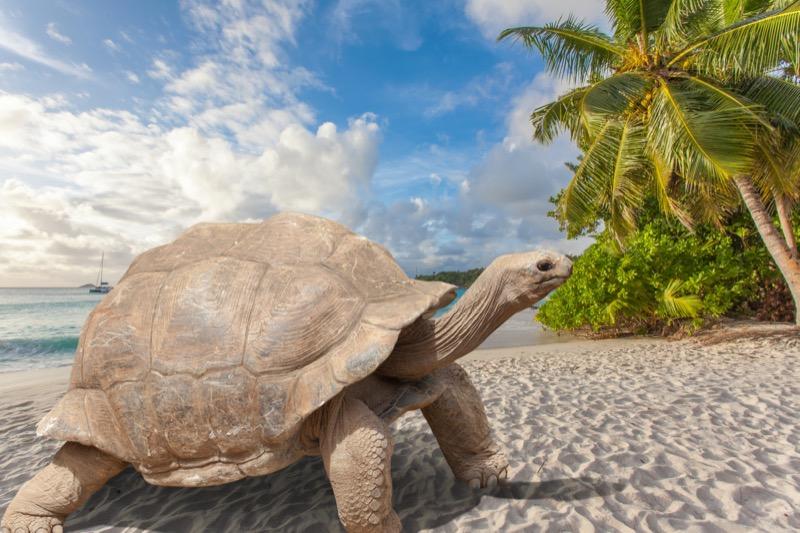 Seychelle-szigetek | óriásteknős 2 - OTP Travel Utazási Iroda
