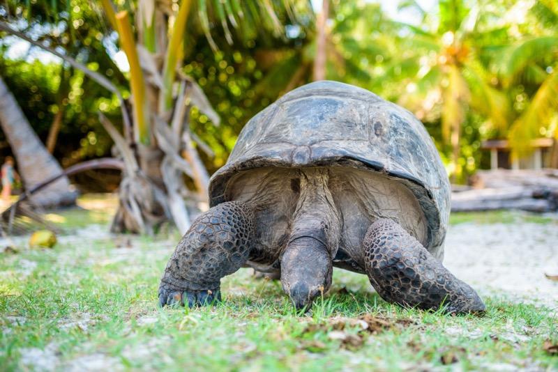 Seychelle-szigetek | óriásteknős 3 - OTP Travel Utazási Iroda