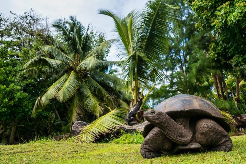 Seychelle-szigetek | óriásteknős 4 - OTP Travel Utazási Iroda