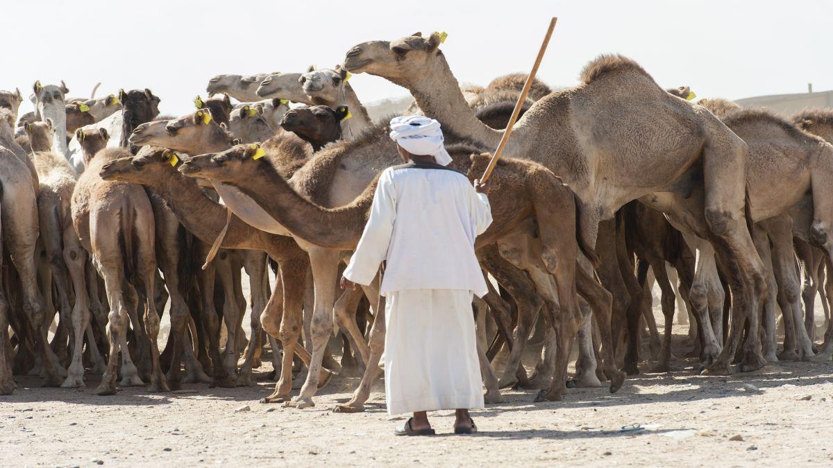 Szaud-Arábia   Rijád   - OTP Travel Utazási Iroda