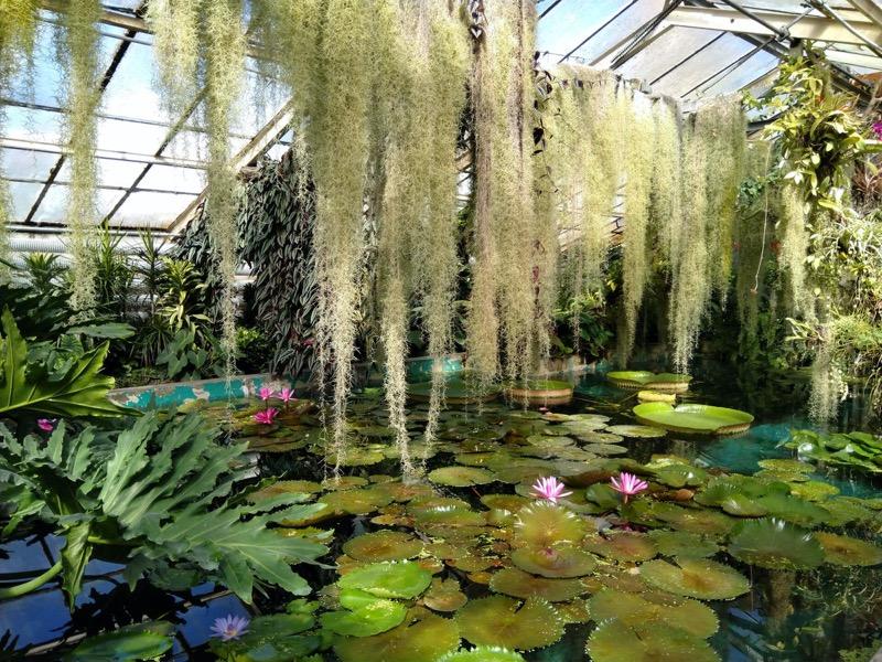 Szlovákia | Pozsony | A Comenius Egyetem botanikus kertje - OTP Travel Utazási Iroda