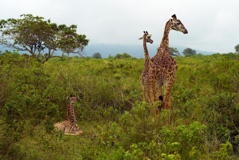 Tanzánia | Arusha - OTP Travel Utazási Iroda