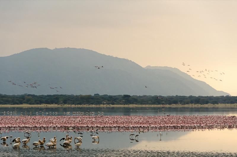 Tanzánia | Manyara-tó Nemzeti Park - OTP Travel Utazási Iroda
