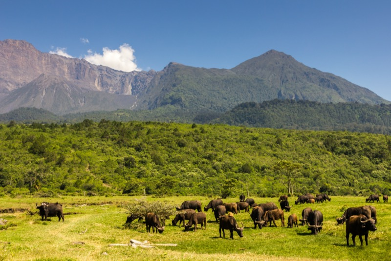 Tanzánia | Meru hegy - OTP Travel Utazási Iroda