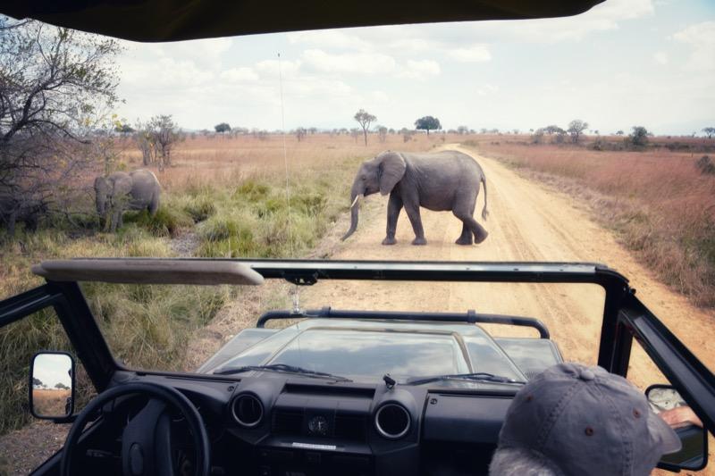 Tanzánia | Mikumi Nemzeti Park - OTP Travel Utazási Iroda