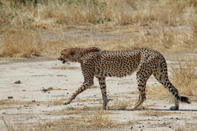 Tanzánia | Ruaha Nemzeti Park - OTP Travel Utazási Iroda