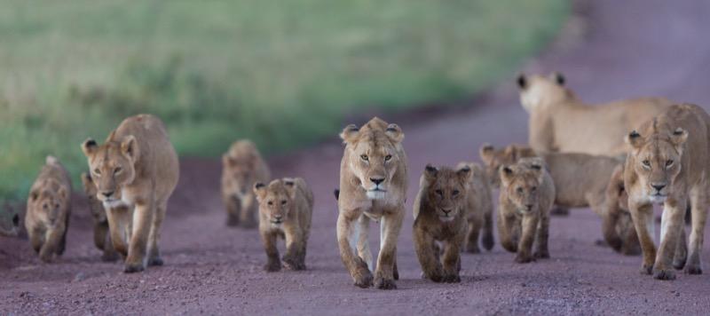 Tanzánia | Ngorongoro - OTP Travel Utazási Iroda