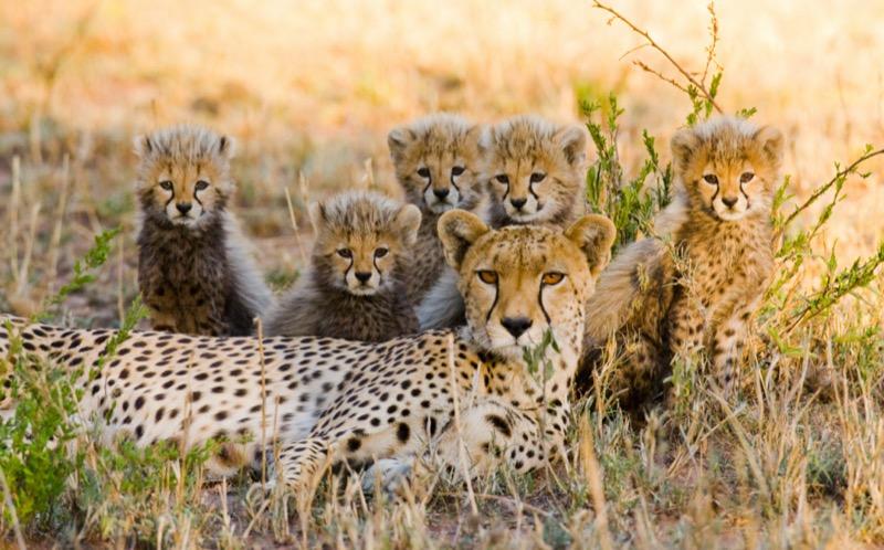 Tanzánia | Serengeti Nemzeti Park - OTP Travel Utazási Iroda