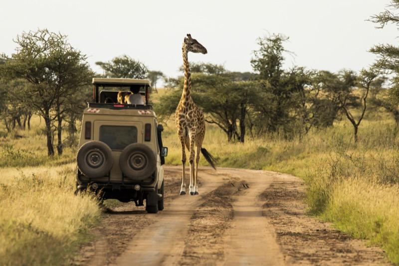 Tanzánia   Zsiráf - OTP Travel Utazási Iroda