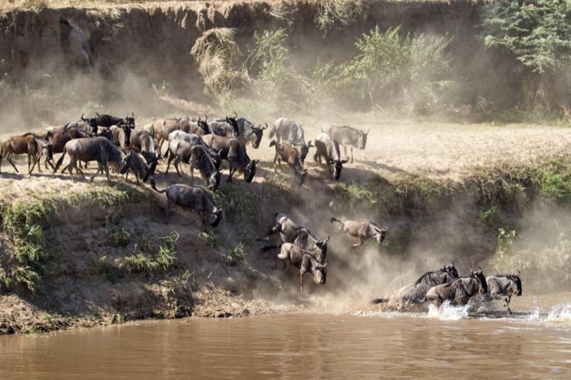 Tanzánia   gnú - OTP Travel Utazási Iroda