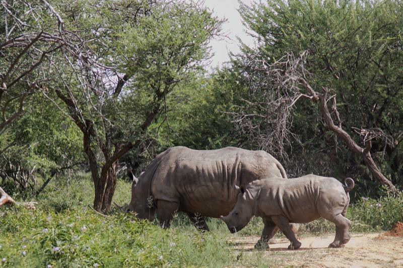 Tanzánia   orrszarvú - OTP Travel Utazási Iroda