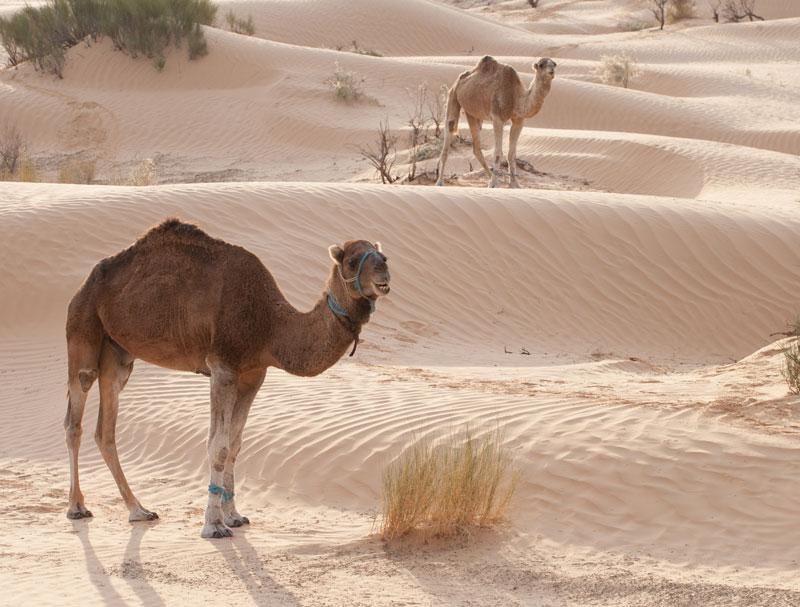 Tunézia | Grand Erg Oriental | - OTP Travel Utazási Iroda