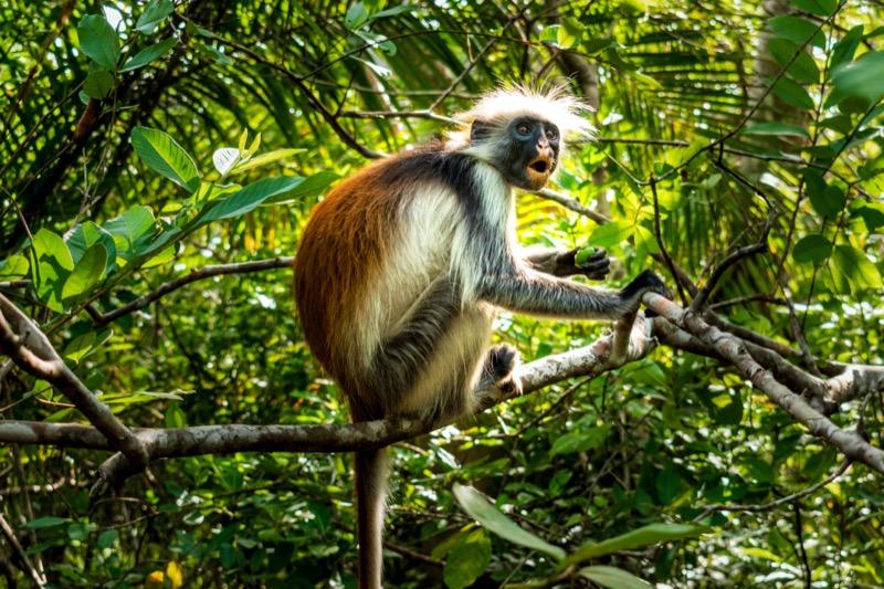 Tanzánia | Zanzibár | Jozani-erdő - OTP Travel Utazási Iroda